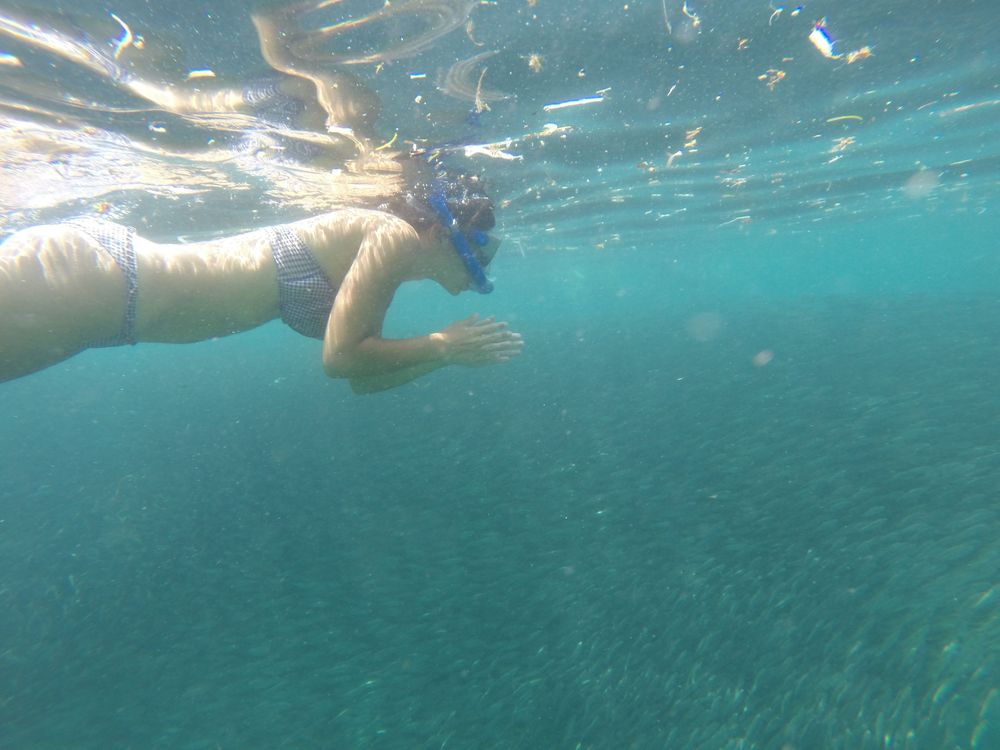 cebu philippines moalboal banc de sardines