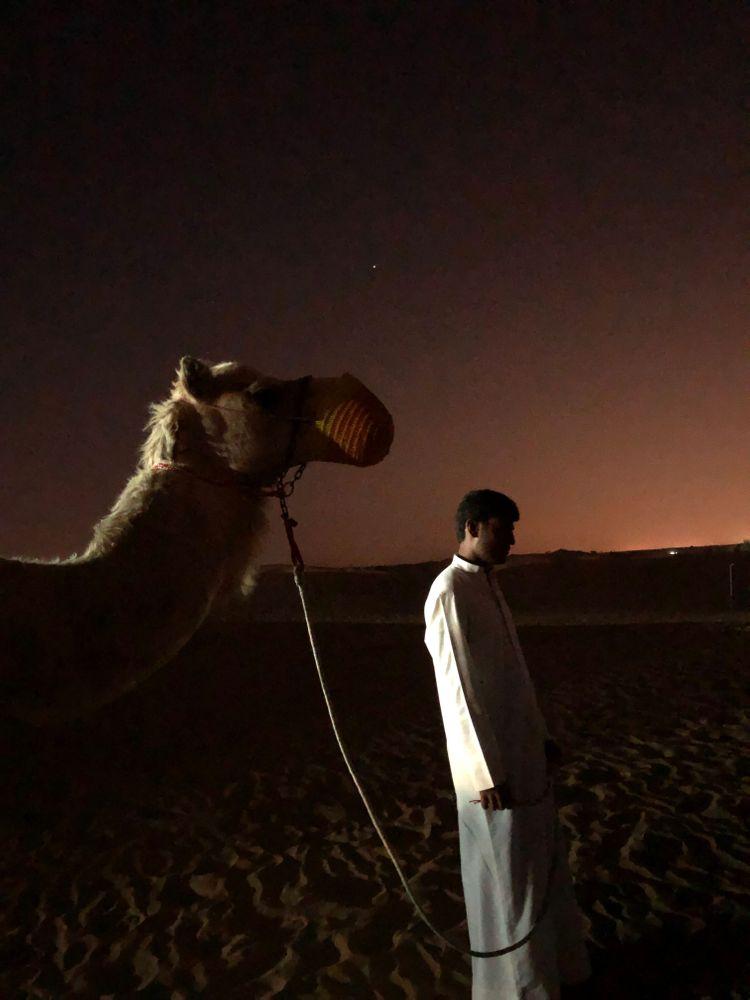 dubai chameau desert