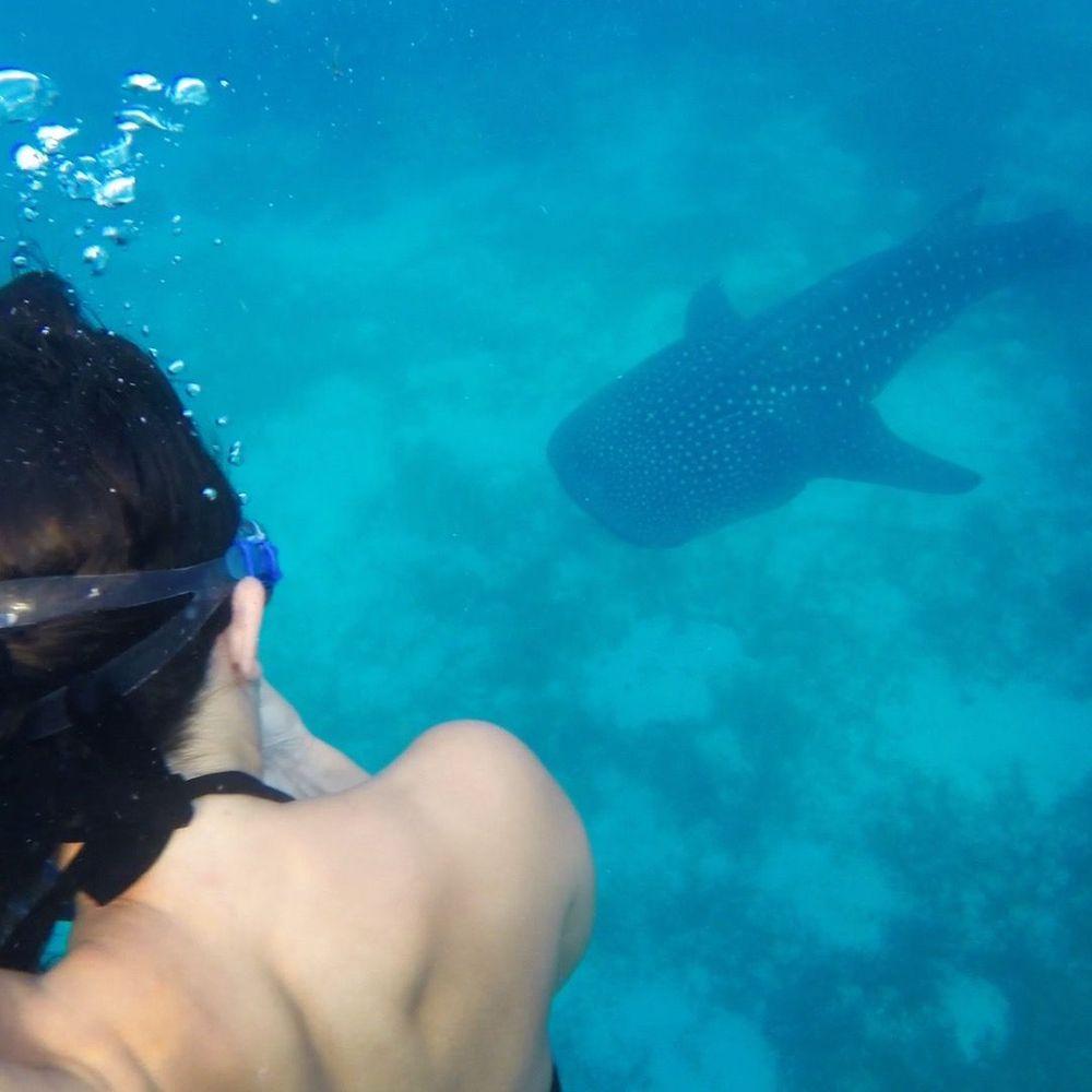 requins baleines que faire aux philippines